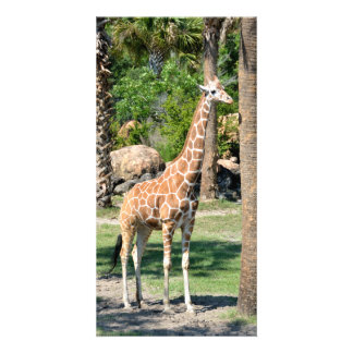 Giraffe photocard picture card