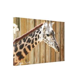Giraffe Photograph Prints