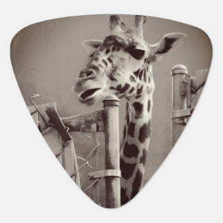 Giraffe Photograph - Vintage Style Guitar Pick