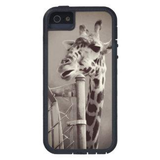 Giraffe Photograph - Vintage Style iPhone 5 Case
