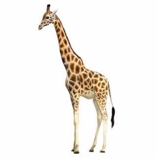 Giraffe Pin Photo Sculpture Button