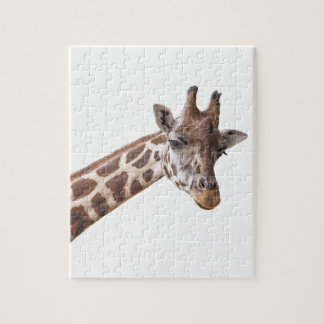 Giraffe Portrait on White Jigsaw Puzzle