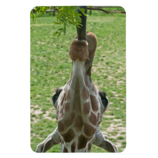 giraffe rectangular photo magnet