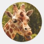 Giraffe Round Sticker