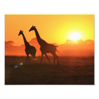 Giraffe Silhouette - Freedom Run Photo Print