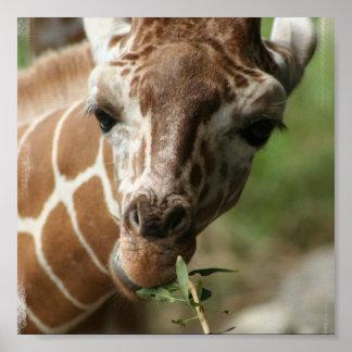 Giraffe Snack Poster Print