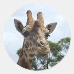 Giraffe Sticker - Round
