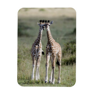 Giraffe Twins Africa Personalize Destiny Destiny'S Magnet