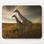 Giraffes and The Landscape Mouse Pads