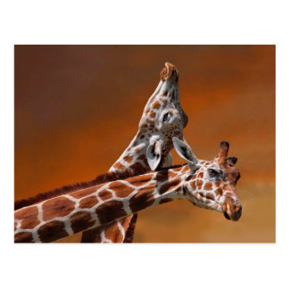 Giraffes couple in love postcard