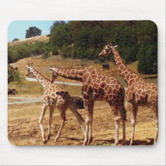 Giraffes Mouse Pad