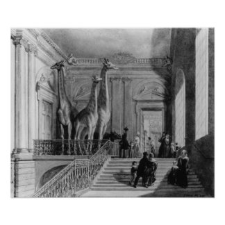 Giraffes on the staircase in the British Poster