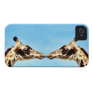 Giraffes touching noses iPhone 4 case