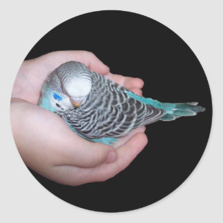 Girl holding baby budgie sticker