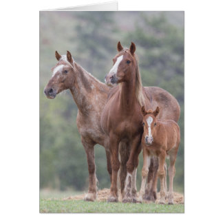 Girl Power - Galloping to Freedom Greeting Card