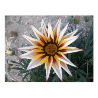 Girlfriend of the Sun Flower Postcard