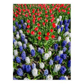 Gisement de fleurs avec les tulipes bleues et les carte postale