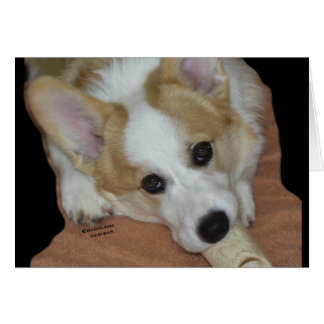 Give A Dog A Bone~Corgi Puppy Card
