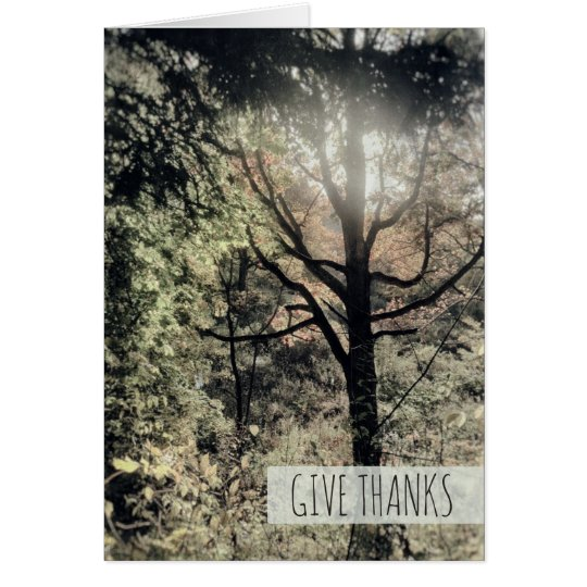 Give Thanks Warm Fall Day Colourful Autumn Forest Card
