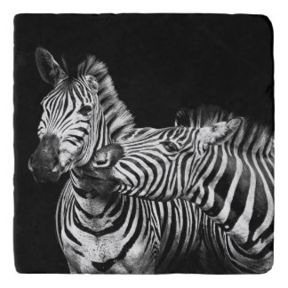 Gives-a-kiss-zebras Trivet