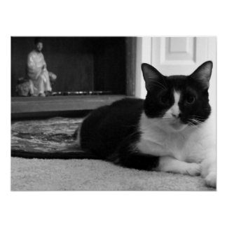 Gizmo: Domestic Short Hair Cat Poster