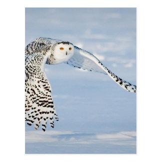 Glacé congelé par neige animale d'hiver d'oiseau carte postale