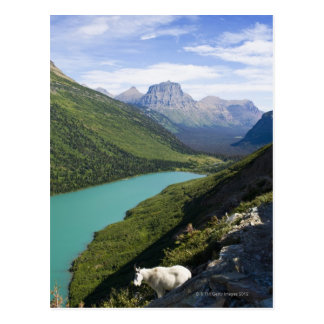 Glacier National Park, Montana Postcard