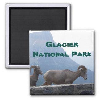 Glacier Park Big Horn Sheep Magnet