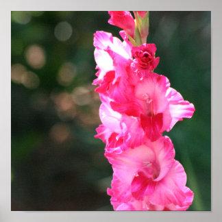 Glad-glad-gladiolus! print