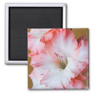 Gladiolus Square Magnet