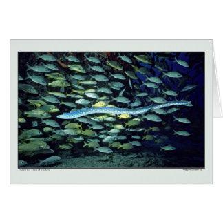 Glass Eel - Sea of Thailand Card