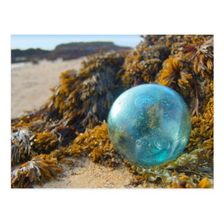 Glass Float on Kelp Postcard