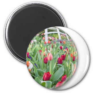 Glass sphere reflecting red tulips flower 2 inch round magnet