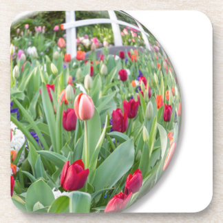 Glass sphere reflecting red tulips flower beverage coasters