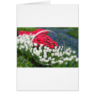 Glass sphere reflecting red white tulips and blue card