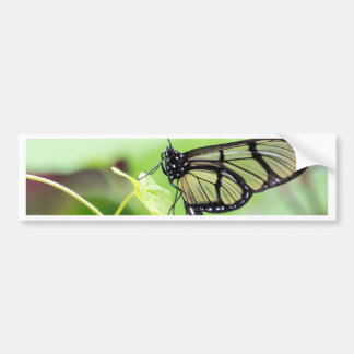 Glass Wing Butterfly Bumper Sticker