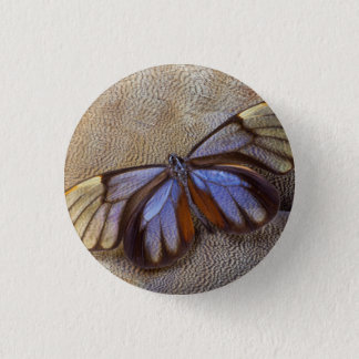 Glass-wing Butterfly Egyptian Goose Feather 1 Inch Round Button