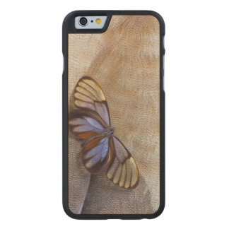 Glass-wing Butterfly Egyptian Goose Feather Carved Maple iPhone 6 Case
