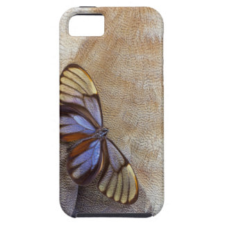 Glass-wing Butterfly Egyptian Goose Feather iPhone 5 Covers