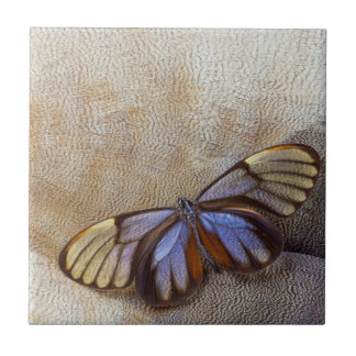Glass-wing Butterfly Egyptian Goose Feather Tile