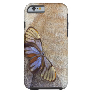Glass-wing Butterfly Egyptian Goose Feather Tough iPhone 6 Case
