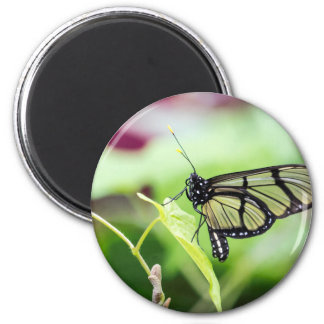 Glass Wing Butterfly Magnet