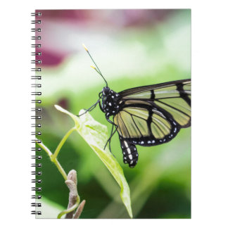 Glass Wing Butterfly Notebook