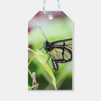 Glass Wing Butterfly Pack Of Gift Tags