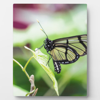 Glass Wing Butterfly Plaque