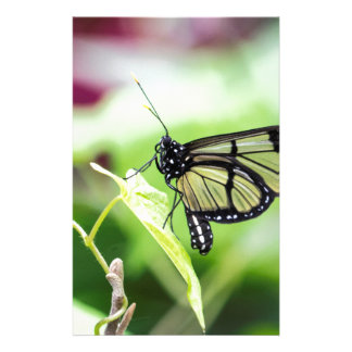 Glass Wing Butterfly Stationery