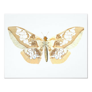 "GlassWing Butterfly 4.25"" X 5.5"" Invitation Card"