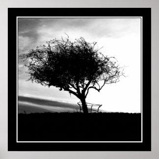 Glastonbury Hawthorn. Tree. Black and White. Poster