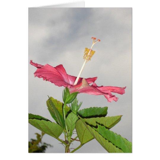 Glebe Reading Garden: Clarion Card