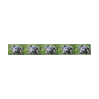 glen of imaal puppy invitation belly band